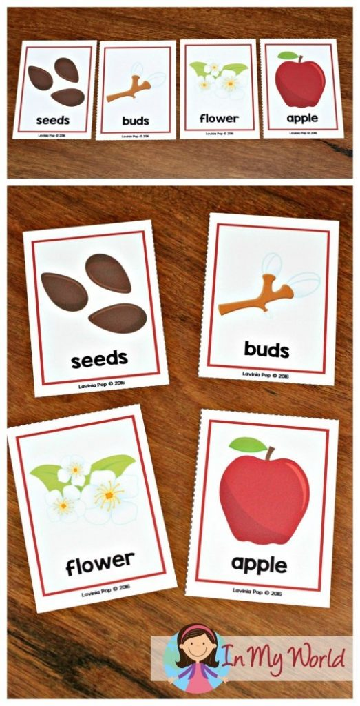 Autumn / Fall Preschool Centers apple life cycle sequencing cards